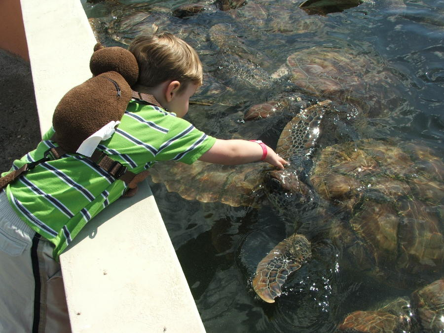 Turtles+As+Pets Alex enjoyed petting the larger turtles. He has been ...
